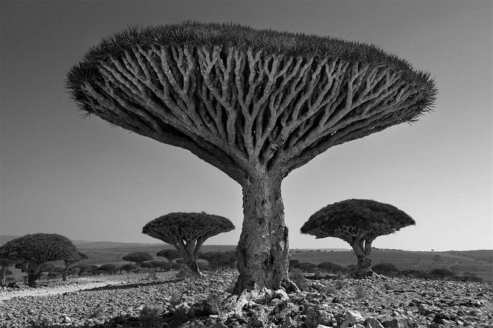 Древние гиганты Земли на снимках фотографа Бет Мун