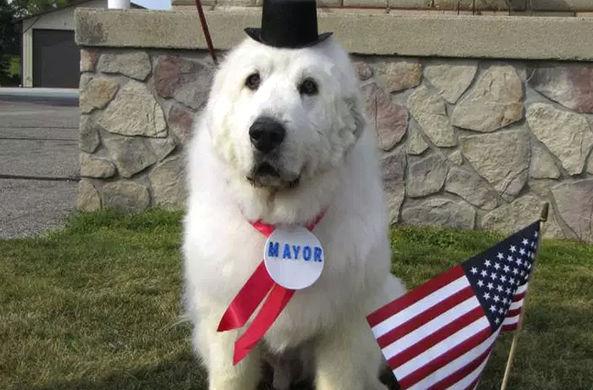 Пес уходит с поста мэра города в Миннесоте