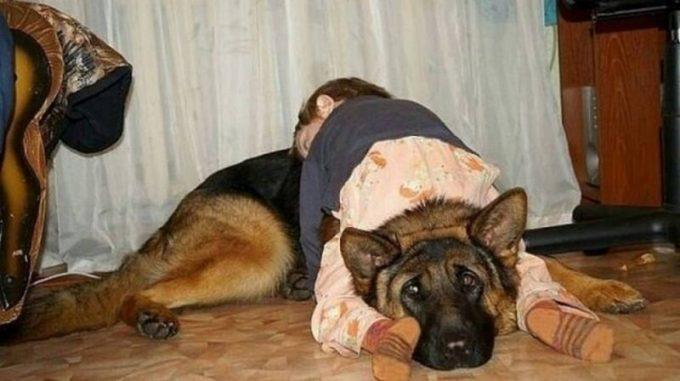 Домашние животные, которые живут с детьми, попадают в рай без очереди