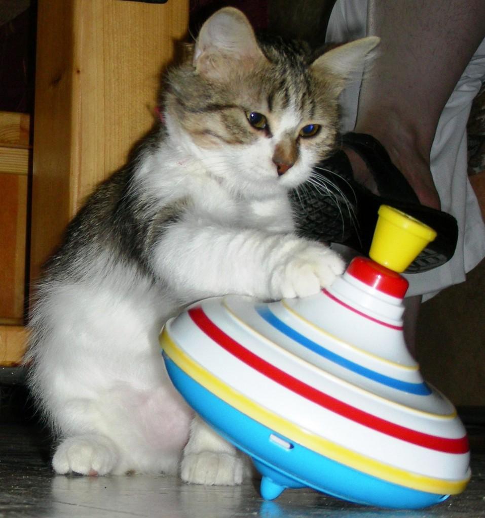 кошка Колобок