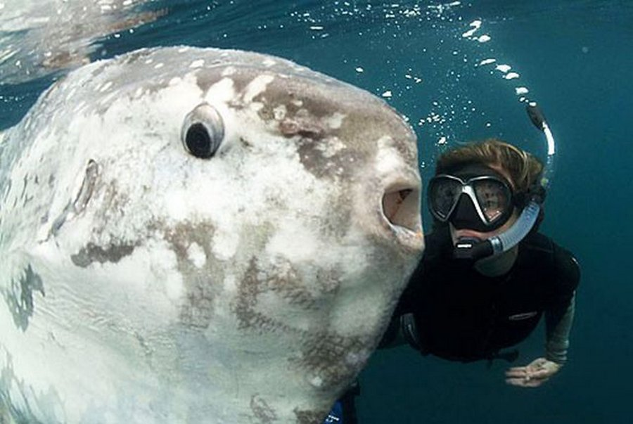 Рыба-луна — выжить не смотря ни на что