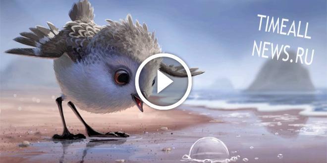 Pixar выпустили новый мультфильм. История про маленького птенчика, которому пришло время взрослеть