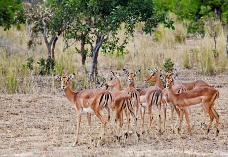 Национальный парк Крюгера ЮАР
