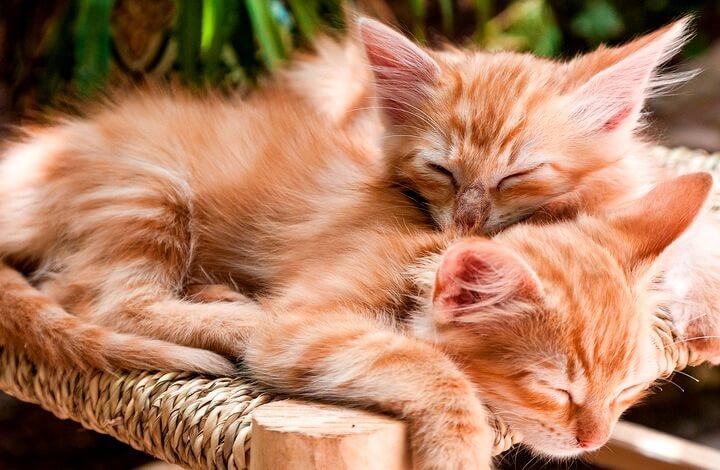 Открытки ко Дню кошек