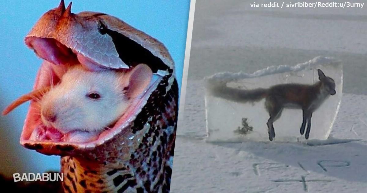 25 дьявольски жутких фото природы, от которой бросает то в жар, то в холод