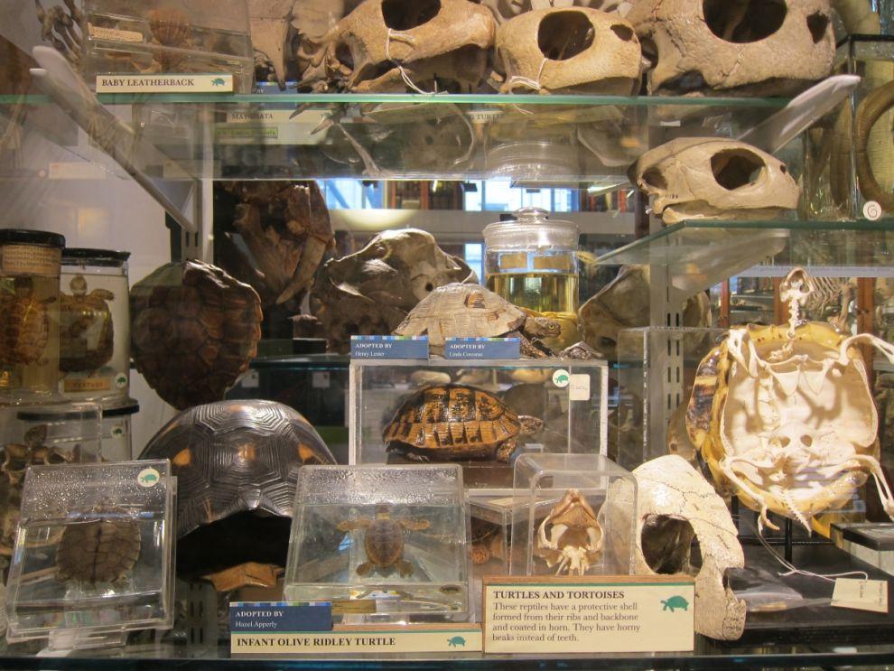 gmoz21 Лондонский музей зоологии и сравнительной анатомии Гранта