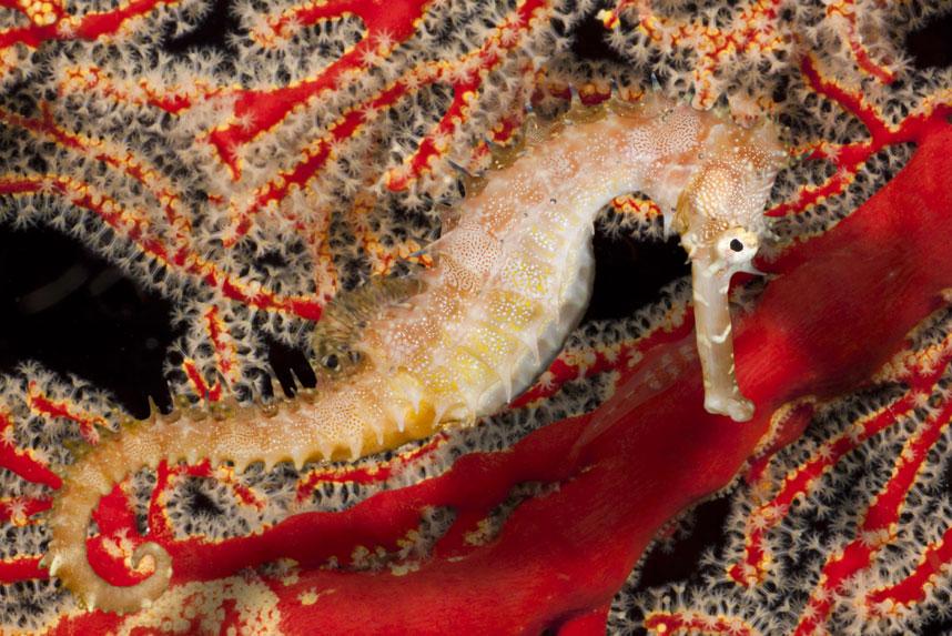 978 Жизнь в океане   подводные фотографии Дэвида Флитэма