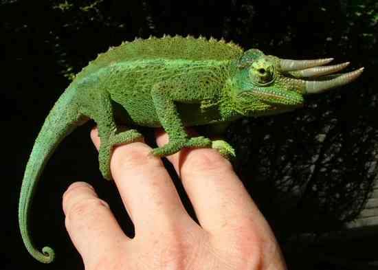 10 животных с невероятными глазами