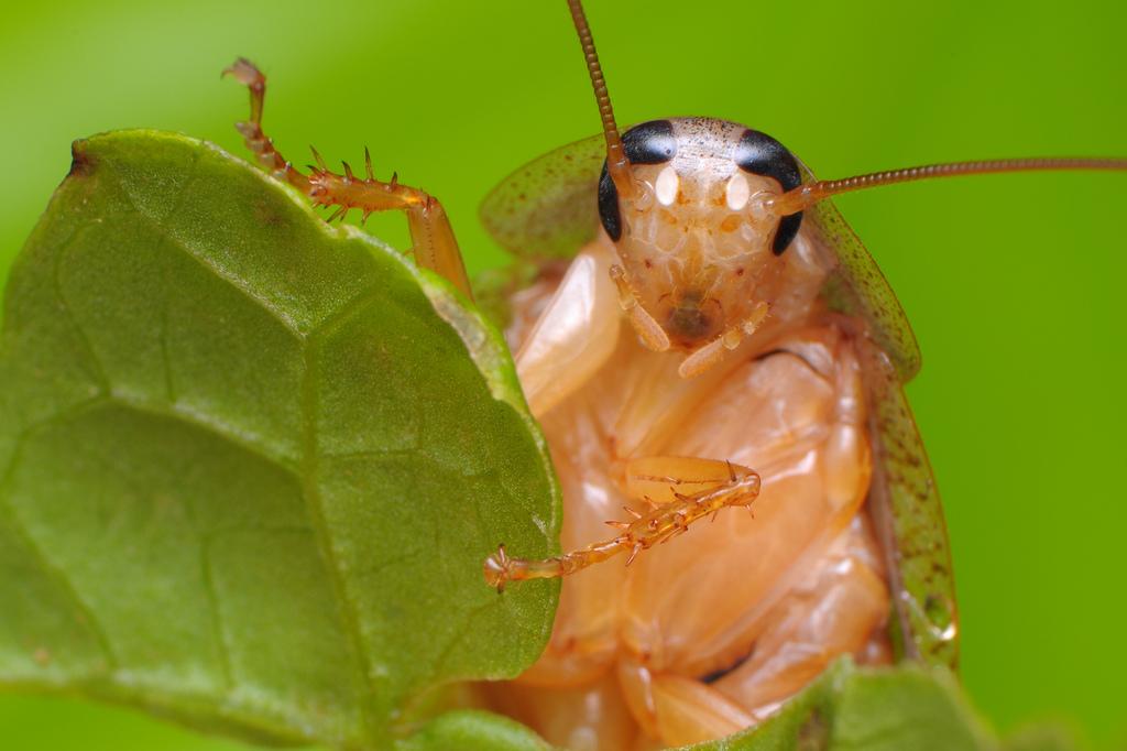 Интересное о тараканах