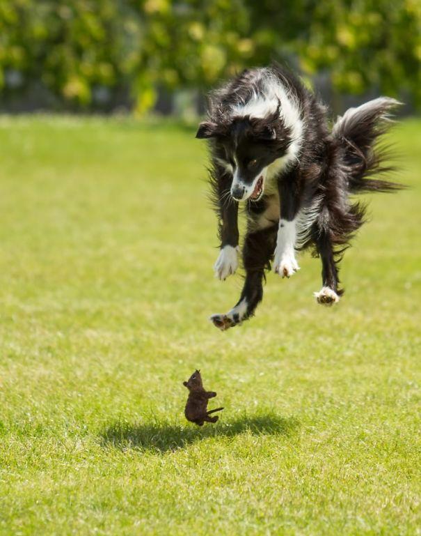 29 фото «крутых» собак, кото…