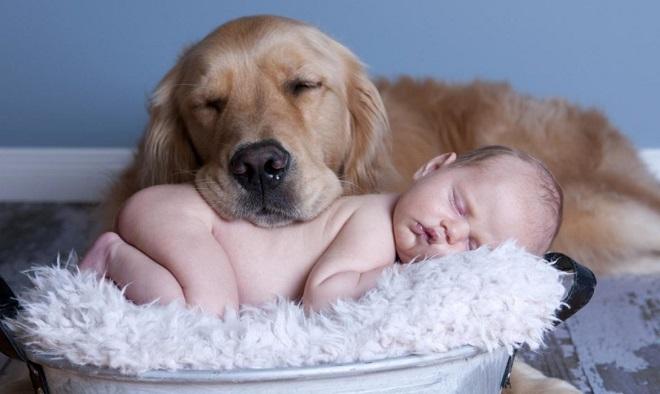 «Четвероногий коллега»: работа, с которой собаки справятся не хуже людей