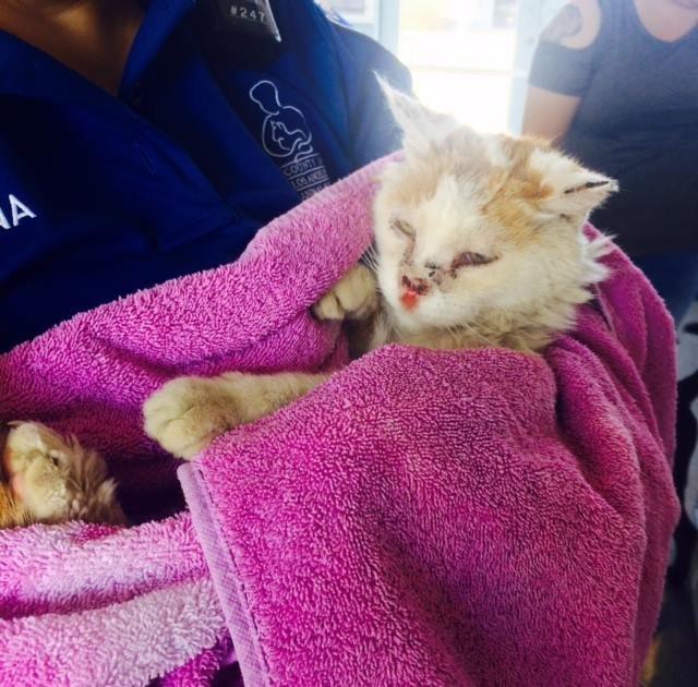 Приютский кот, лишившийся части носа, благодарен за спасение