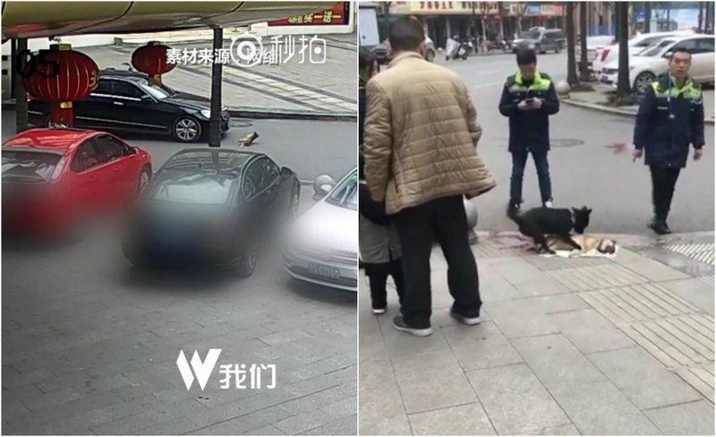 Пёс пытается «разбудить» сбитого машиной товарища