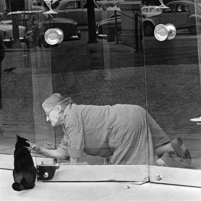 Люди и кошки: любовь, попавш…