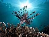 подводное царство рыб
