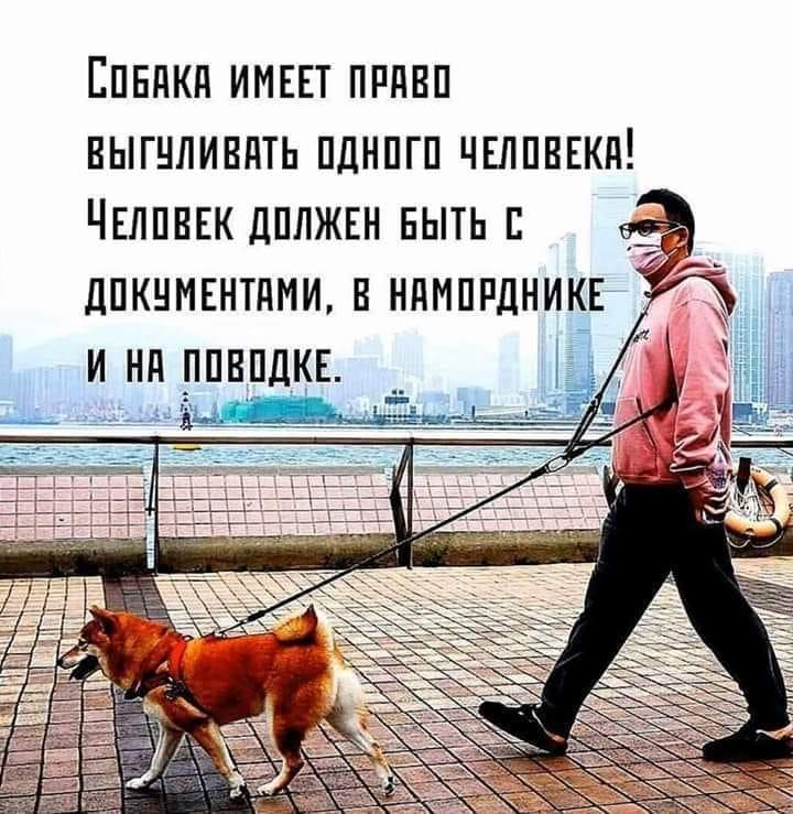 — Мы с дочуркой хотим завести собачку, а муж категорически против…