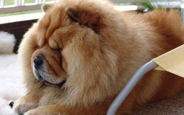 10 лучших собак среднего