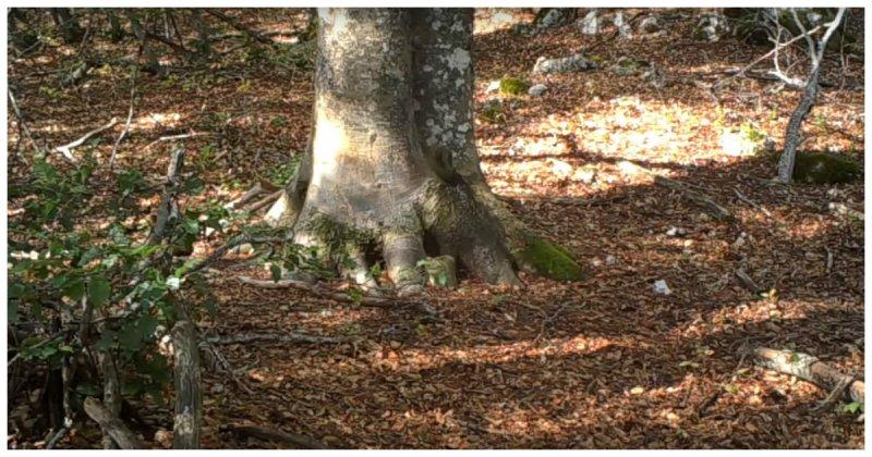 Биолог установил у дерева скрытую камеру и за год она наснимала много удивительных вещей из жизни лесных обитателей Апеннины, Биолог, видео, животные, италия, лес, позитив, скрытая камера