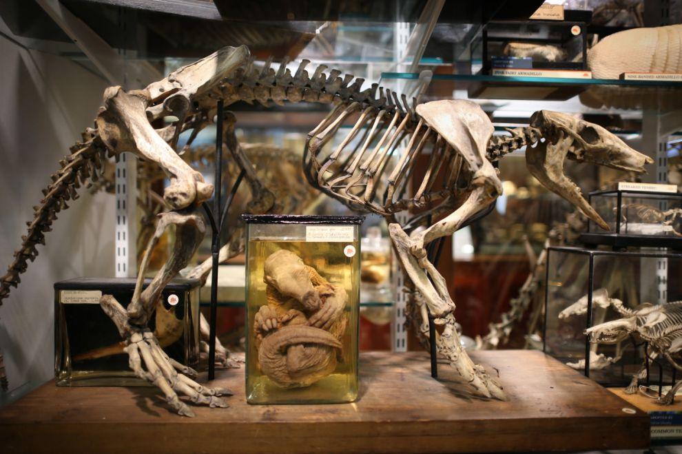 gmoz02 Лондонский музей зоологии и сравнительной анатомии Гранта