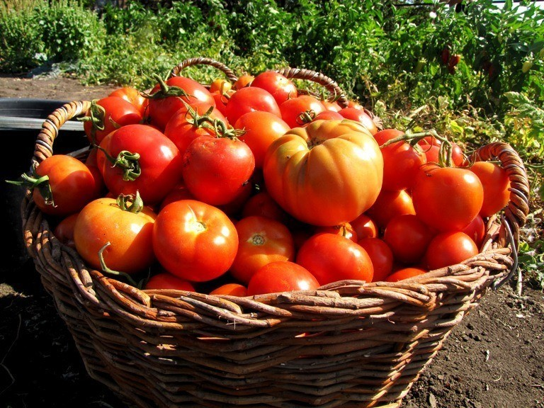 ТОП-40 ошибок при выращивани…