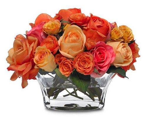 Как вырастить розу из срезанного цветка? С этим способом и садовник не нужен