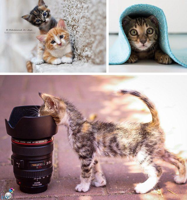 ЧТЕНИЕ ДЛЯ БЕЗЗАВЕТНЫХ КОШКОЛЮБОВ. Признаки кошачьей любви.
