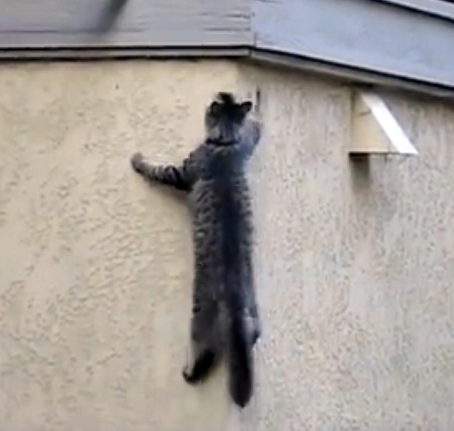Вы удивитесь, когда увидите, как этот кот возвращается домой