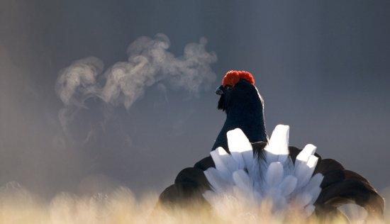 Фотоконкурс дикой природы «Золотая черепаха»: лучшие кадры