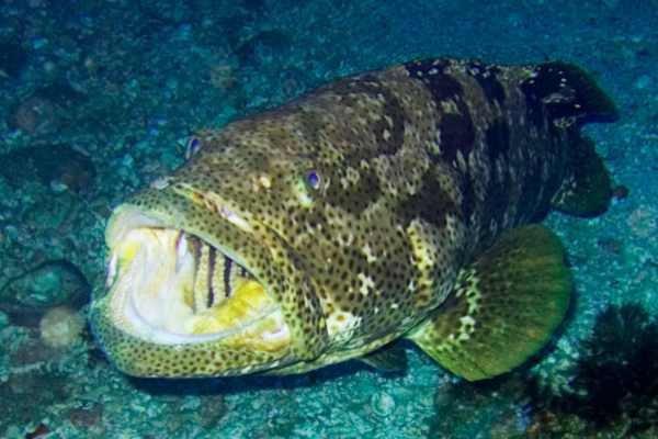 Рыбы, находящиеся на грани вымирания