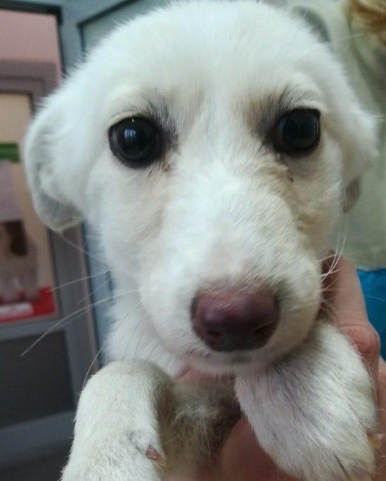 «Каждый день мог стать для неё последним!». К днепровским ветеринарам попала собачка с очень сложным заболеванием