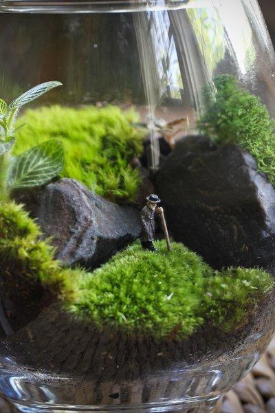 Создаем миниатюрный сад в го…