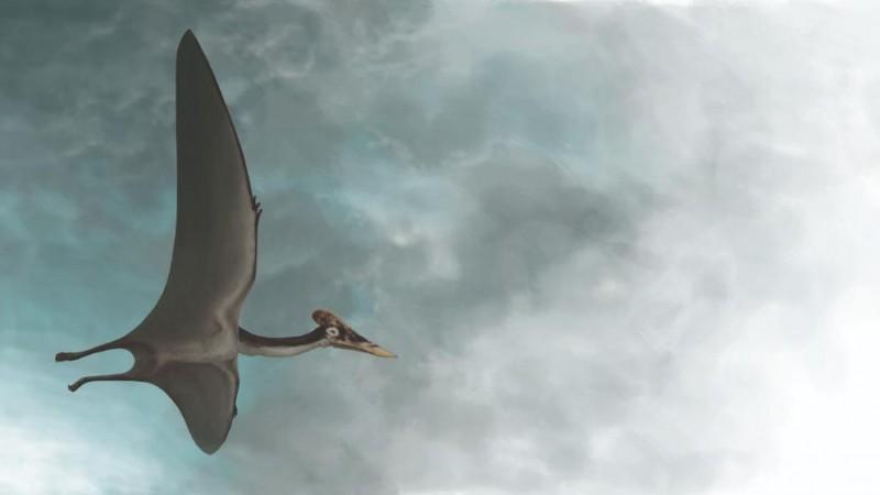 Дракула жил 66 миллионов лет назад