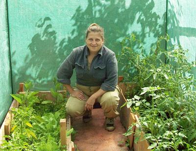 Выращиваем вкусный и полезный цикорный салат