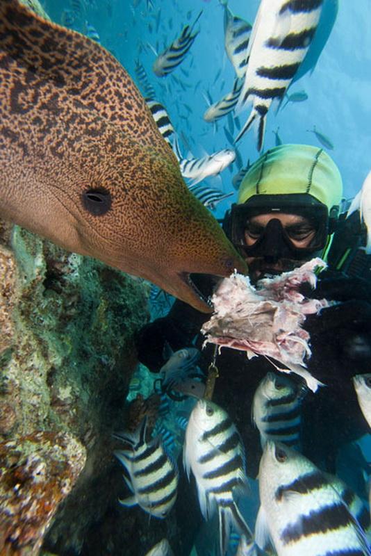 593 Жизнь в океане   подводные фотографии Дэвида Флитэма