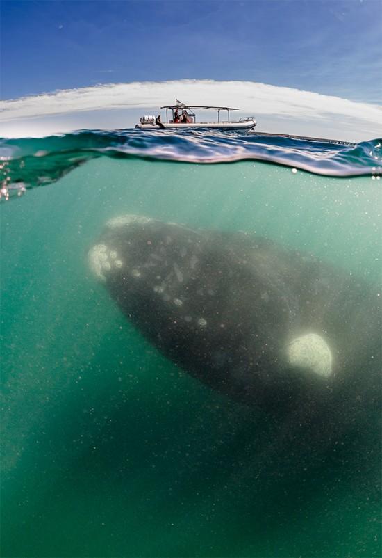 киты переворачивают лодки