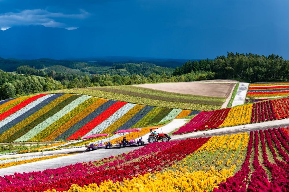 Прогулка по японской цветочной ферме