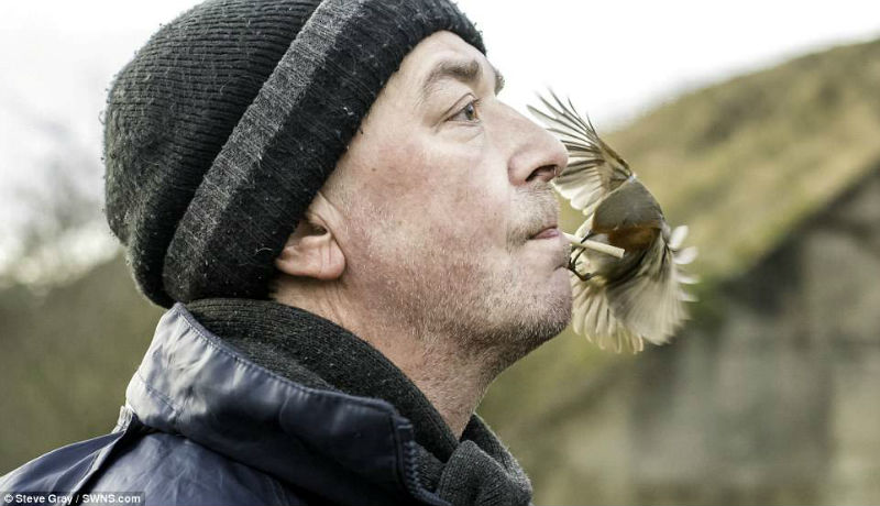 Настоящий Доктор Дулиттл: как британец стал повелителем диких птиц