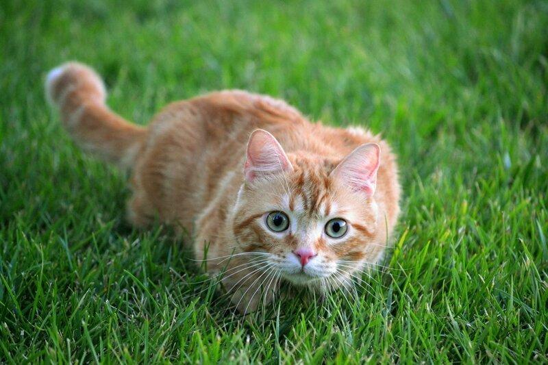Вредные привычки кошек, кото…
