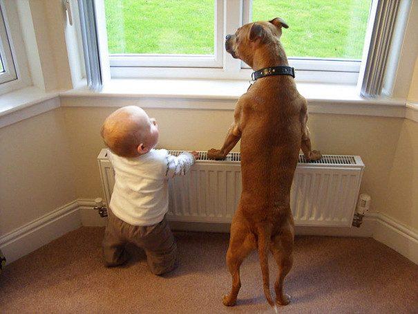 Малыши и домашние питомцы копируют друг друга