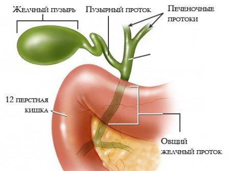 Чистим желчный пузырь при помощи лекарственных растений