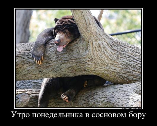 Животный позитив