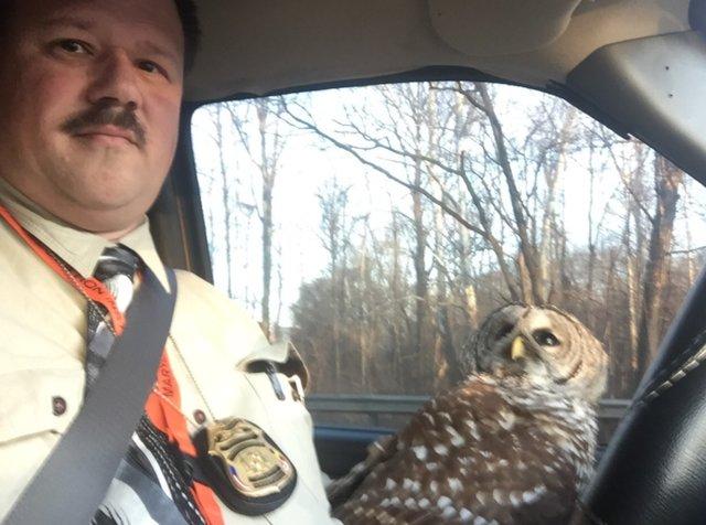 В Мэриленде полицейский спас с дороги сову