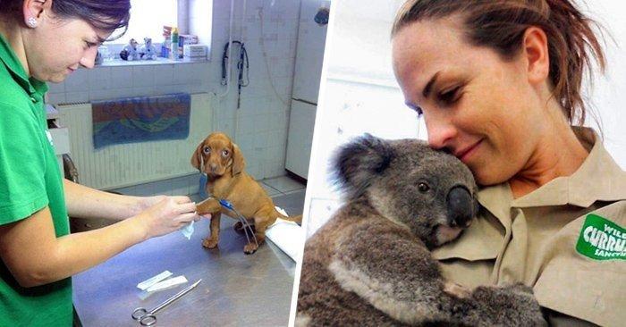 Фото-доказательства того, что ветеринар - замечательная профессия