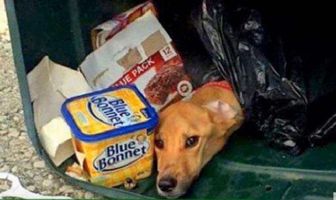 Женщина уехала и выбросила в мусорник собаку! От вида истощавшей собаки хотелось плакать, но теперь это позади…