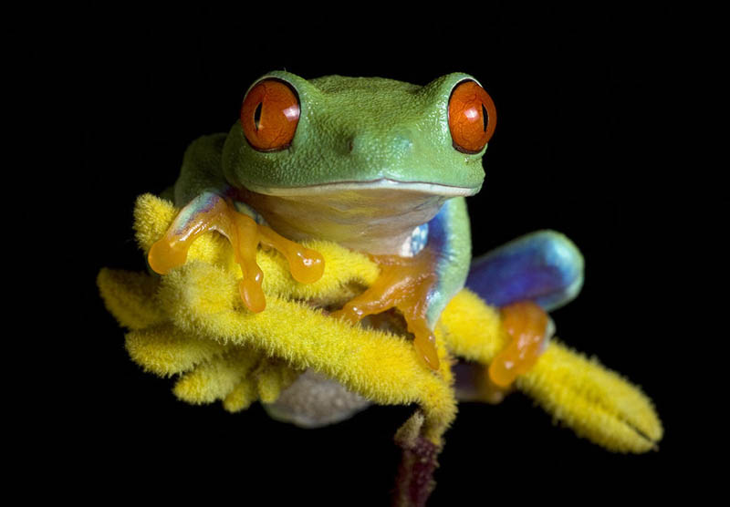 239 Несколько фактов о лягушках