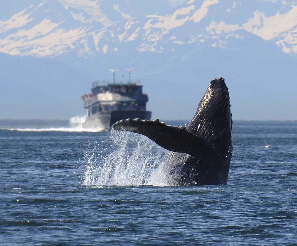 Где можно увидеть китов в природе? Где живут киты? Сколько видов китов существует