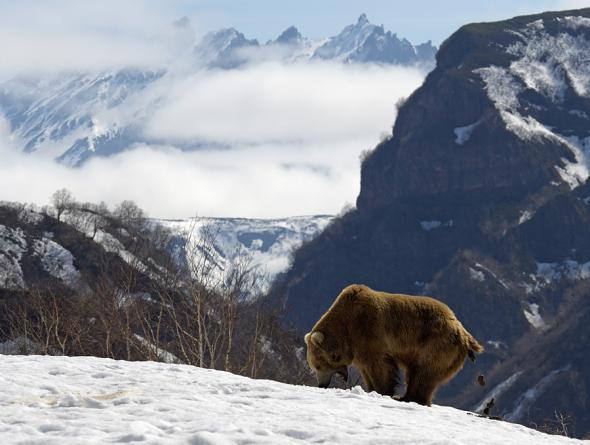 """""""О медведях, как о чертях, можно рассказывать бесконечно и занятно..."""""""
