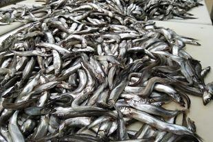 Где в России самая вкусная рыба