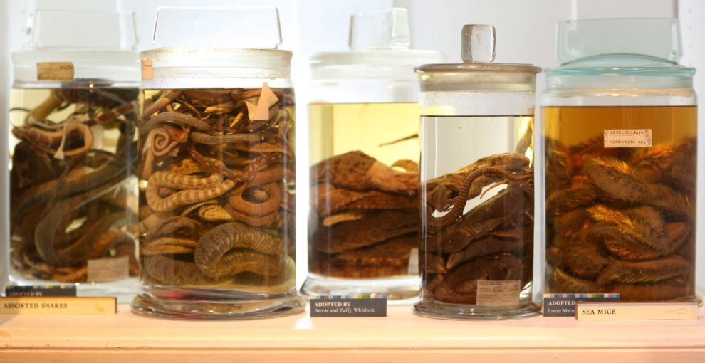 gmoz13 Лондонский музей зоологии и сравнительной анатомии Гранта