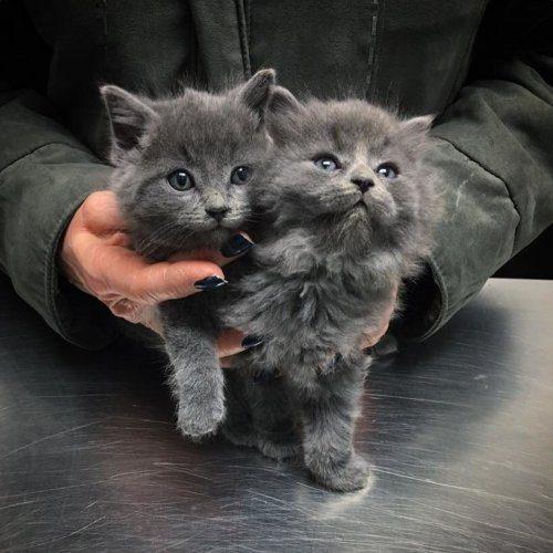 Счастливая история двух котят